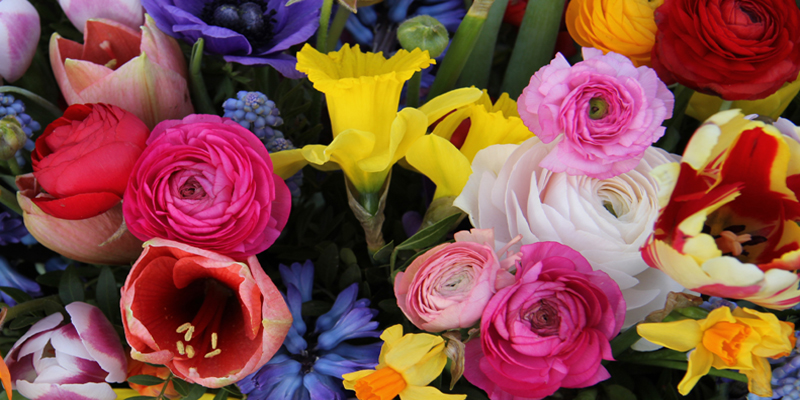 Odds and Buds Florist Spring Flowers